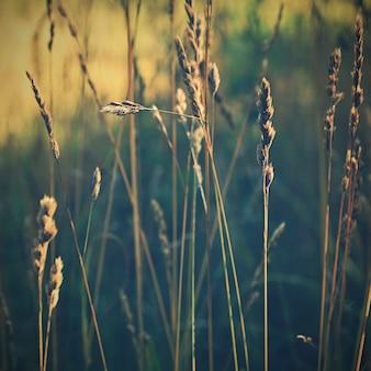 Art sunny nature background