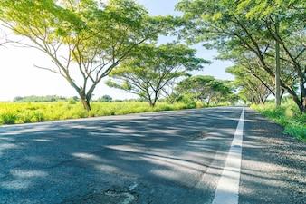 森林のアスファルト道路