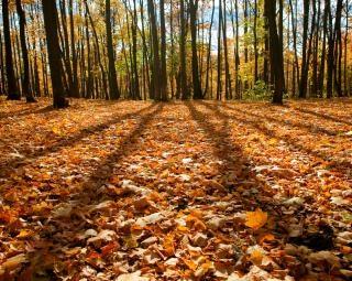 autumn, scenery