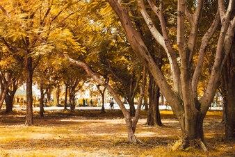 Осенний лес с лучами теплого света, освещающий золотую листву и пешую дорожку, ведущую в сцену