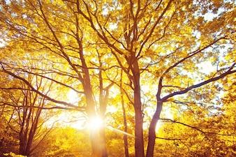 森の中の秋。