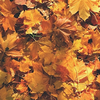 Autumn leaves. Natural seasonal colored background