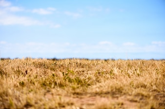 Autumn meadow background