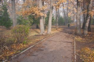 autumn park & fog