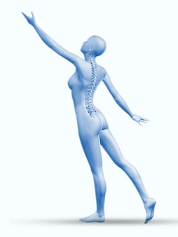 Backbone anatomy