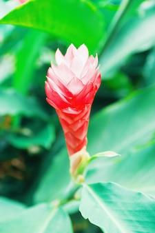 背景の葉は、植物のクローズアップを咲く