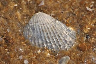 background seashell sea shell pattern shells