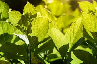 Backlight leaf background