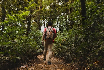 Backpacker hiking in forest