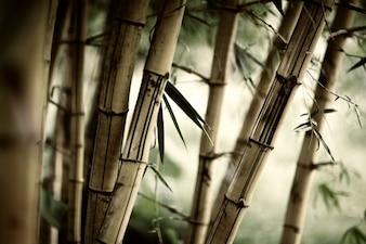 Bambu leaf plant wood green