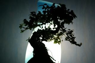 Banzai tree in the room, luminous