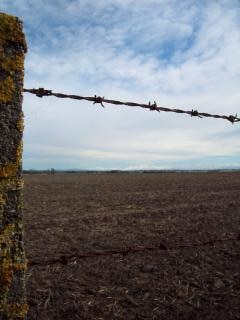 Barb wire fence, South Canterbury