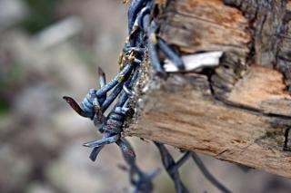 Barbed wire closeup, wood