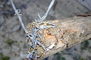 Barbed wire closeup, sharp, spikes