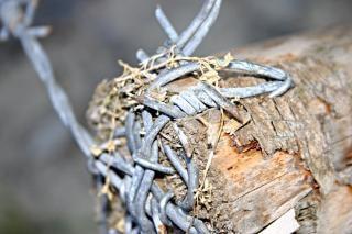 Barbed wire closeup, sharp