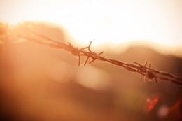 Barbed Wire in Sun free photo