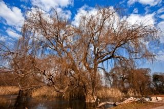 Bare tree  cyan