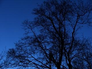 Bare trees  night