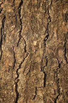 Bark of a tree close up