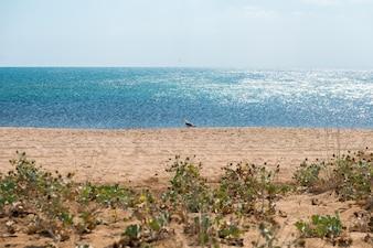 クリミアのビーチ