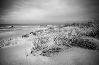 Beach landscape in black and white