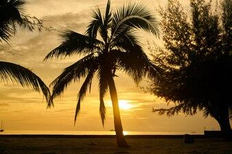 Beach sky tree trip vacations