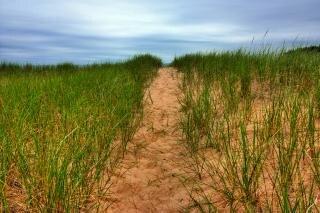 Beach trail   hdr  grass