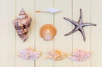 Beautiful arrangement of seashells