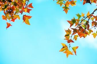 美しい秋の葉と秋の季節の空の背景、秋の公園のカラフルな紅葉の木、秋の木ヴィンテージの色調の葉。