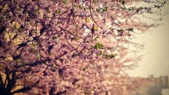 美しい花の木。晴れた日に太陽と自然の風景。春の花。春の抽象的な背景をぼかします。