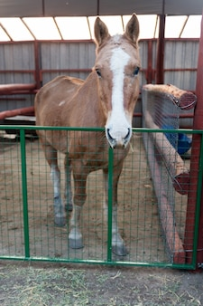 Beautiful brown horse in the stable