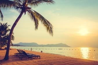 Beautiful coast palm sunny vacation