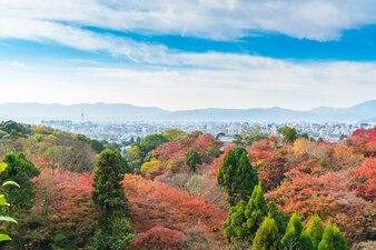 Beautiful Colorful Autumn Leaves .