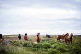 Beautiful horses in the wild