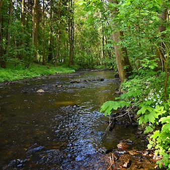 Beautiful nature with a river of rocks and forest. Outdoor colorful background with water.
