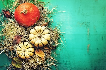 Beautiful pumpkins on hay on turquoise background top view