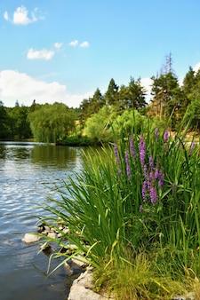 美しい紫色の花。森の中の池。ナチュラルカラフルな背景。