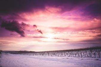 Beautiful purple sky