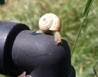 beautiful snail