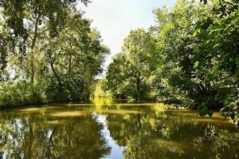 川と美しい夏の風景。バタ運河。チェコ共和国の美しい景色。
