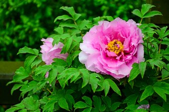 Beauty flower in a plant