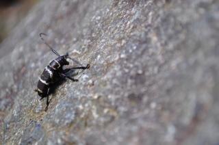 Beetle on a rock