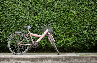 Bicycle on leaf wall background