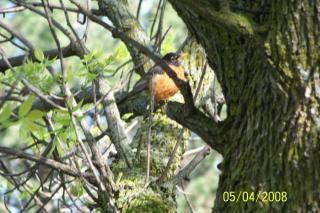 Bird, glade