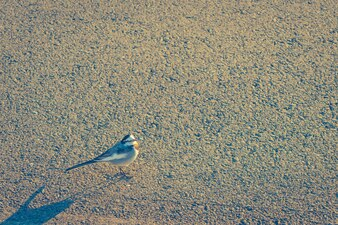 Bird on the road . ( Filtered image processed vintage effect. )