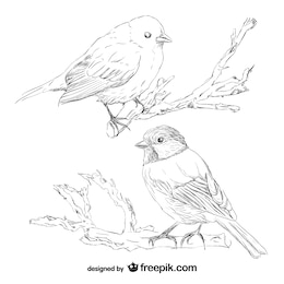 Bird retro hand drawn vector