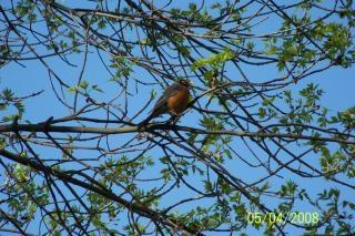 Bird, sunlight
