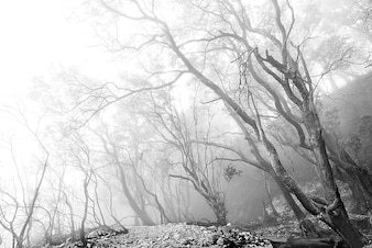 Black and white forest view