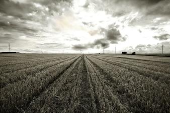 Black and white rural landscape.