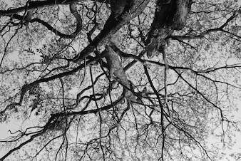 Black and white tree branch
